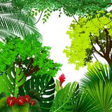 Tropical jungle background with palm trees and leaves on white background Royalty Free Stock Photo