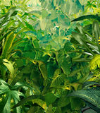 Tropical Jungle Background Stock Image