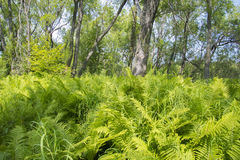 Tropical jungle on the banks of the sacred lake. Stock Photo