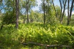Tropical jungle on the banks of the sacred lake. Tropical jungle on the banks of the sacred lake Baikal Stock Image