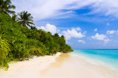 Tropical jungle and beach Stock Images