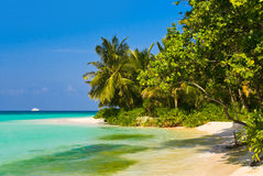 Tropical jungle and beach Stock Photography