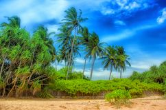 Tropical jungle and beach Royalty Free Stock Photos