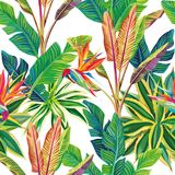 Tropical jungle birds of paradise and leaves seamless. Sunny cheerful day on the tropical jungle. Birds of paradise and leaves vector seamless pattern Royalty Free Stock Photo