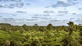 The tropical jungle in Cambodia. View of the tropical jungle in Cambodia near the site of Angkor Stock Photos