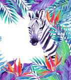 Tropical jungle card. Floral design with zebra on white background. Stock Photo