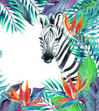 Tropical jungle card. Floral design with zebra on white background. Zebra and exotic flowers. Watercolor jungle card. Hand painted illustration with zebra on Royalty Free Stock Photography