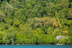 Tropical jungle coastline Royalty Free Stock Image