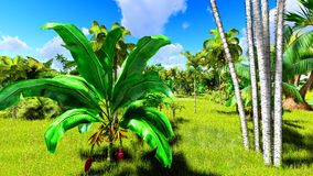 Tropical jungle during a day 3d rendering. Tropical jungle during a day royalty free stock image