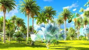 Tropical jungle during a day 3d rendering. Tropical jungle during a day royalty free stock photography