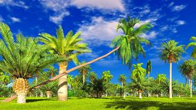 Tropical jungle during a day 3d rendering. Tropical jungle during a day royalty free stock images