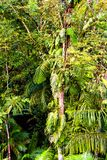 Tropical jungle forest in Central America Stock Images