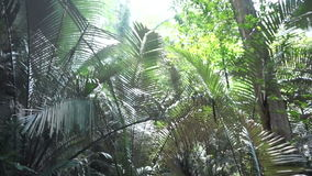 Tropical jungle forest next to the cliff stock video