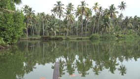 Tropical jungle forest with palm trees on island near calm lagoon lake water in amazing 4k seascape of Kerala Backwaters. Tropical jungle forest with palm trees stock video