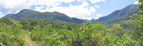 Tropical jungle and high mount Stock Image