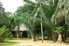 Tropical jungle house in Bolivia. Stock Photography