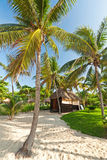 Tropical jungle hut Royalty Free Stock Photos
