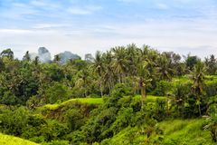 Tropical jungle on the island of Bali Royalty Free Stock Photo