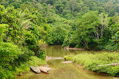 Tropical jungle on an island Borneo in Indonesia Royalty Free Stock Images