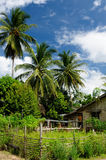 Tropical jungle on an island Borneo in Indonesia Stock Photography