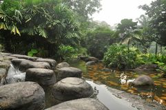 Tropical jungle in kuala lumpur malaysia Royalty Free Stock Photos