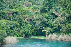 Tropical jungle by lake Stock Photography