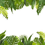 Tropical Jungle Leaves Background stock photos