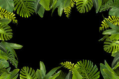 Tropical Jungle Leaves Background stock images