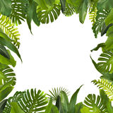 Tropical Jungle Leaves Background royalty free stock photo
