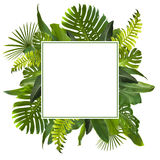 Tropical Jungle Leaves Background. Tropical Jungle Leaves Frame can be used as Background Stock Photos