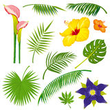 Tropical jungle leaves and flowers vector set Stock Photos