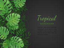 Tropical jungle leaves. Green tropic palm and monstera leaves, lianas on the black background. Vector Illustration Royalty Free Stock Images