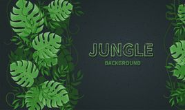 Tropical jungle leaves. Green tropic palm and monstera leaves, lianas on the black background. Vector background banner Stock Photos