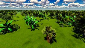 Tropical jungle stock video