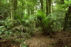 Tropical jungle. Lush green foliage in tropical jungle Royalty Free Stock Photo