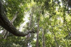 Tropical jungle, Malaysia Stock Photography