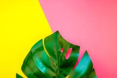 Tropical jungle monstera leaf on bright background stock photography