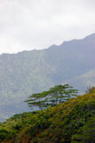 Tropical jungle and mountains Royalty Free Stock Photography