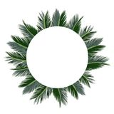 Tropical palm sammer frame. Tropical jungle palm background with tree leaves eng empty space. Blank for advertising card or invitation. Nature concept Royalty Free Stock Images