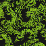 Tropical jungle palm leaves vector pattern background. Stock Images