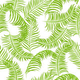 Tropical jungle palm leaves vector pattern background. Stock Photos