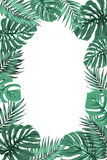 Tropical jungle palm monstera leaf frame portrait. Exotic tropical jungle rainforest bright green palm tree and monstera leaves border frame template on white Stock Photography