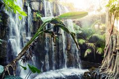 Tropical - jungle park in Palma, Mallorca Royalty Free Stock Photography