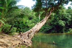 Tropical jungle with pond. stock image