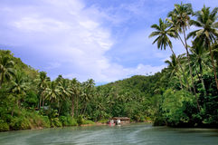Tropical jungle river Stock Images