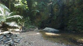 Tropical jungle stock video