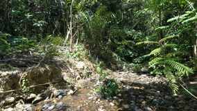 Tropical jungle stock video footage