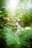 Tropical jungle Royalty Free Stock Photo