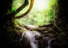 Tropical jungle in Thailand Stock Image