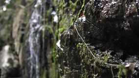 Tropical jungle waterfall in deep forest. changes focus from moss on the rocks in slow motion. 3840x2160. Tropical Jungle Waterfall in Botanic Gardens stock video footage